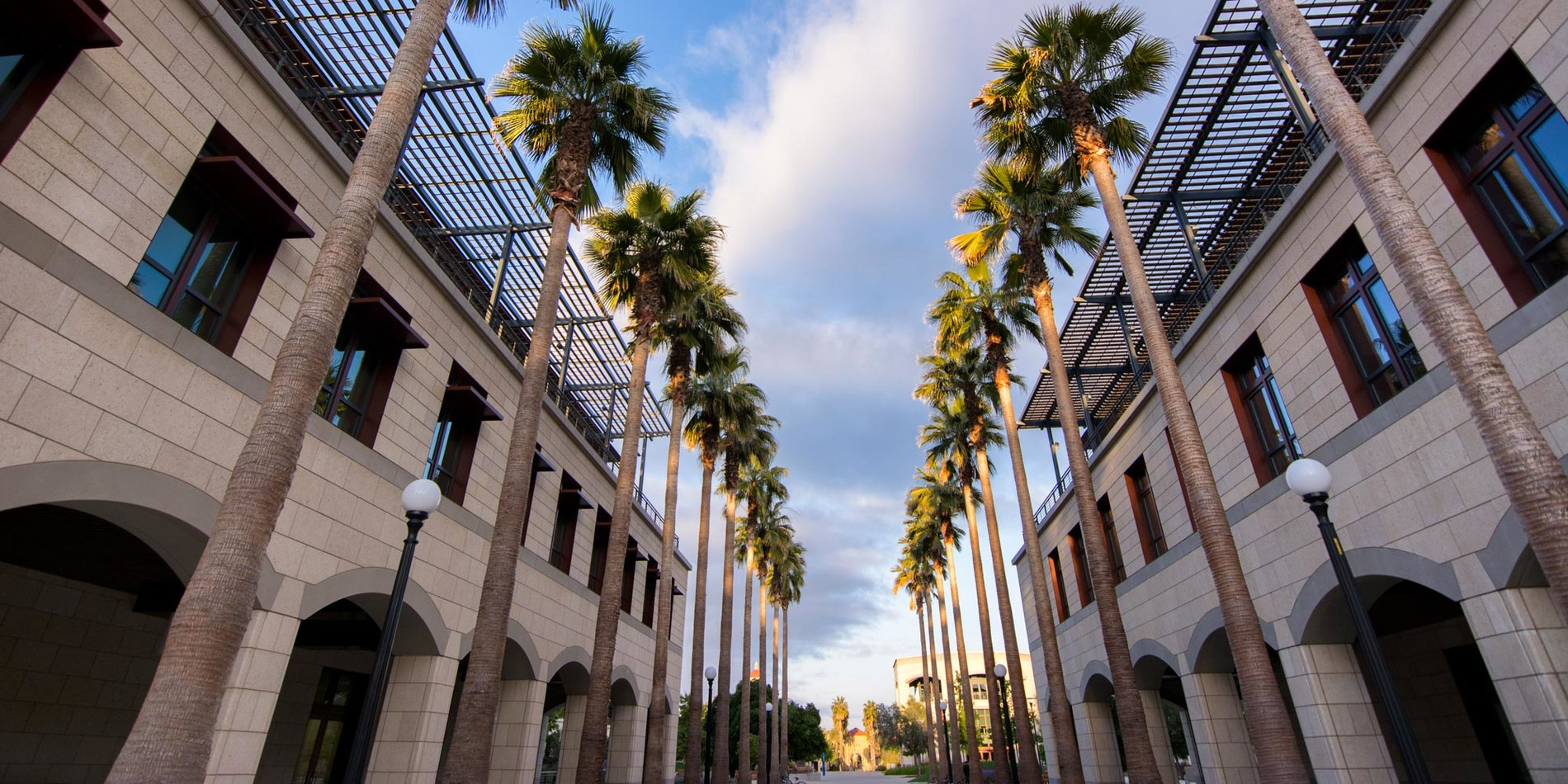 Stanford Engineering Quad pathway lined by palm trees
